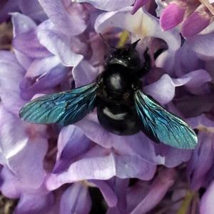 BeeBlueR0000575-web2