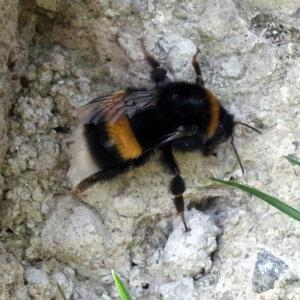 BeeBumbleR0000432-web