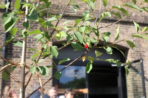 KingsCrossCherry-IMG_6963-web