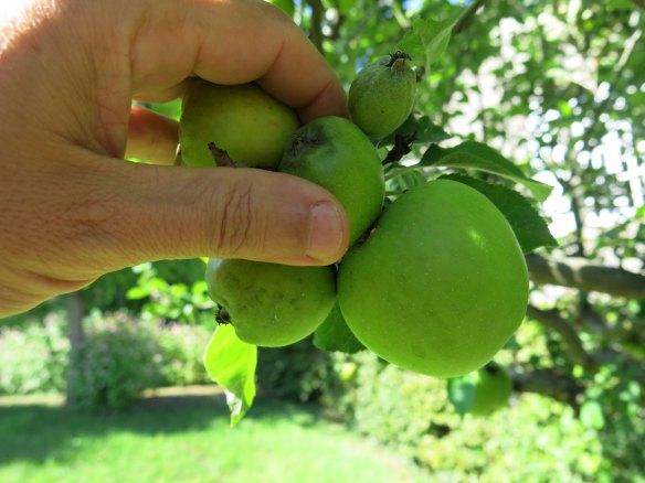 AppleTrimming-IMG_7251-web