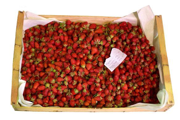 SourceStrawberries_MG_1730