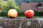 30Sep_Apple_Harvest_MG_3863