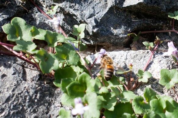 Bee1_MG_4429
