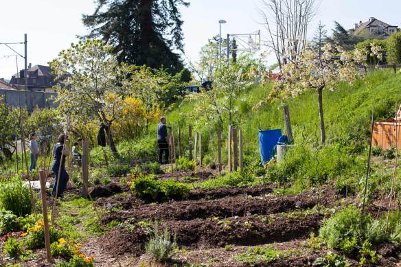 Allotment_MG_6483
