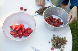 Strawberry_Jam_MG_7445