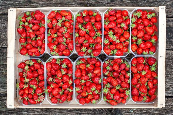 Five kilos of premium strawberries