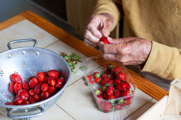 Helping hands: my father hulling the strawberries