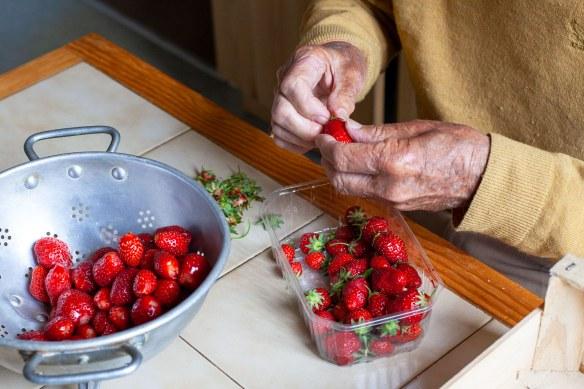 Mon père équeute les fraises