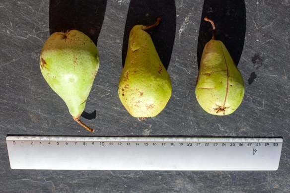 Curé pears